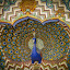 Peacock by Karin Wollina - Artistic Objects Other Objects ( jaipur, rajasthan, artistic, fort, peacock,  )