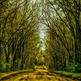 Long Dirt Road by Lisa Brooks - Landscapes Forests ( dirt road, beautiful, trees )