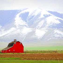 by Karie Nolte - Landscapes Mountains & Hills ( ranch, pastel, mountains, red barn, red, blue, montana, minimalism, white, landscape, soft )