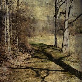 Long Shadows by Vivian Gordon - Digital Art Places ( nature, shadow, trail, lanscape, trees )