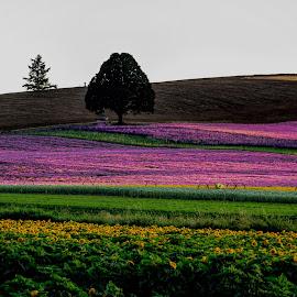 by Judy Heitzman - Flowers Flowers in the Wild ( golden hour )