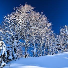 Čarobno by Bojan Kolman - Nature Up Close Trees & Bushes