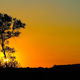 by Rina Walton - Nature Up Close Other Natural Objects ( orange, sunset )