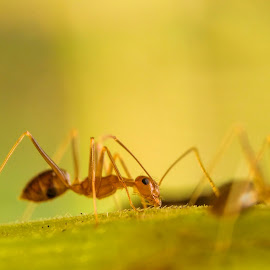 An Ant by Rodhifan Fdp - Instagram & Mobile Android ( mobilography, macrodaily, macros, macro, macrophotography, macro photography, mobile phone, nature up close, insects, insect, ant, macro shot, animal )