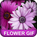 Flower GIF APK for Bluestacks