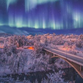 areloa borealis by Vedran Bozicevic - Landscapes Weather ( lights, night photography, stars, landscape,  )