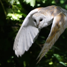 by Anthony Hutchinson - Animals Birds