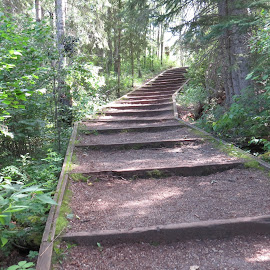 Stairs amid trees by Rose McAllister - City,  Street & Park  City Parks ( stairs, nature, green, trees, landscape, woods )