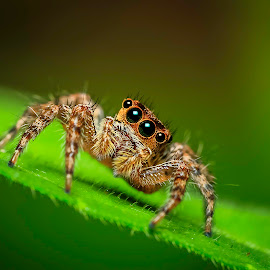 I'm look cute? by KC Soo - Animals Insects & Spiders (  )