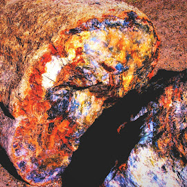 Prtrified Tree iner colors by Dave Walters - Artistic Objects Other Objects ( petrified, nature, tree, colors, national parks )