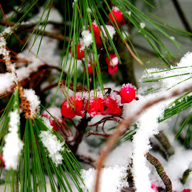 First Snow by Martin Stepalavich - Nature Up Close Trees & Bushes
