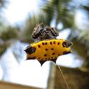 Aranha-de-espinhos