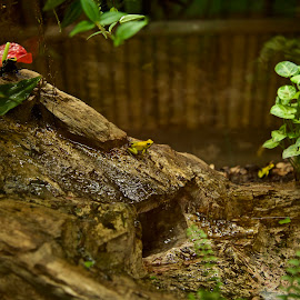 rainforest frog, by Monika Sedláčková - Animals Amphibians ( frog terární, yellow frog, little frog, rainforest frog )