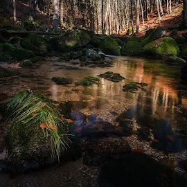 Jizerky by Radek Winter - Landscapes Forests