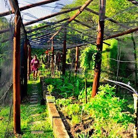 a homemade garden of vegetables by Rogerio Ribas - Buildings & Architecture Other Interior
