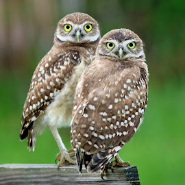 by Photo9981  XXX - Animals Birds