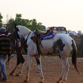 Horse for tourists by Samir Kr Samanta - Animals Horses