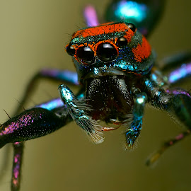 Alien!! by Sunny Joseph - Animals Insects & Spiders