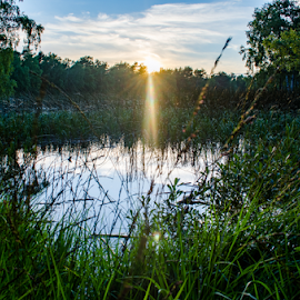 Summer evening. by Tomas Nelsing - Novices Only Landscapes ( clouds, water, nature, sunset, trees, summer, bog, evening )