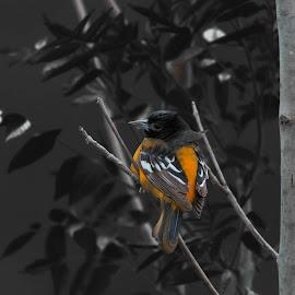 by Wilma Michel - Digital Art Animals