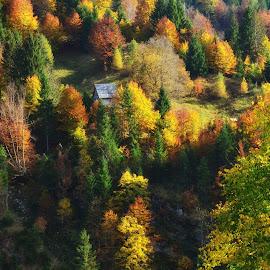 Osamljena hiška by Bojan Kolman - Landscapes Forests