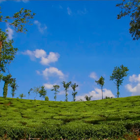 God's teabag (tea plantation in Kerala). by Pranav Babu - Landscapes Travel ( wayanad, kerala, india, tea plantation )