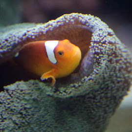 by Maranda Moore - Animals Sea Creatures