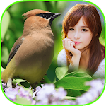 Bird Frame Collage Apk