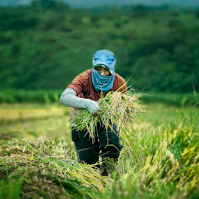 lady farmer by Darryl Espiritu - People Portraits of Women
