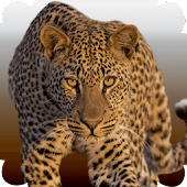 Download Animal Sounds APK to PC