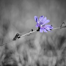 Purple majesty  by Todd Reynolds - Digital Art Things