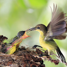 by Prachit Punyapor - Animals Birds ( fantastic wildlife )