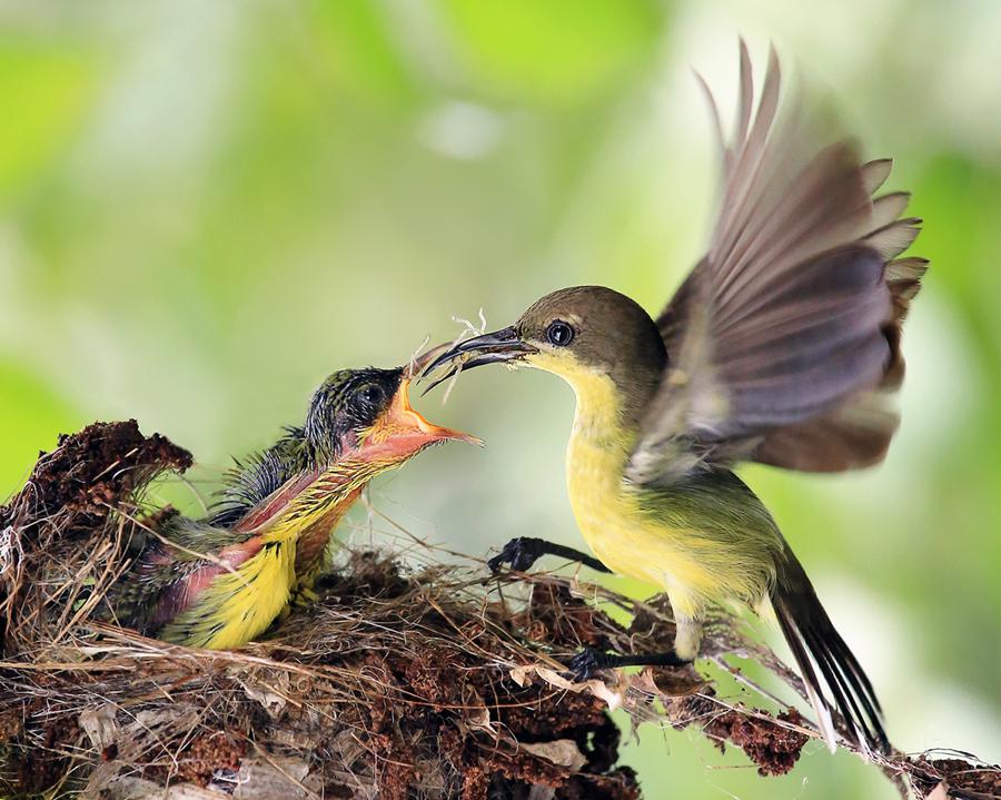 by Prachit Punyapor - Animals Birds ( fantastic wildlife )