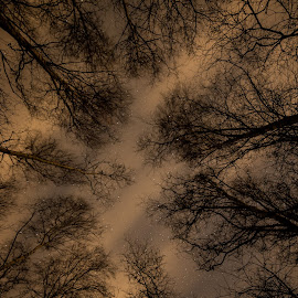 Forest at night by Froddy Baun - Nature Up Close Trees & Bushes ( fanø, forest, night, denmark )
