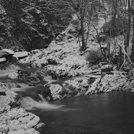 Nantcol Waterfall by DJ Cockburn - Black & White Landscapes ( water, uk, monochrome, black and white, flowing, wales, llanbedr, winterscape, forest, landscape, river nantcol, rhaeadr nantcol, grayscale, afon nantcol, winter, tree, cold, nature, nantcol waterfall, snow, snowscape, snowdonia, gwynedd, britain )