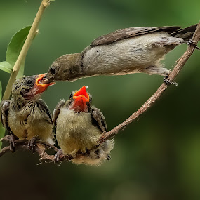 My youngest turn by MazLoy Husada - Animals Birds ( baby, young, animal )