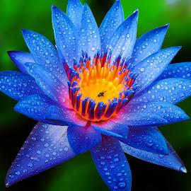 by Ar Lyn - Flowers Single Flower