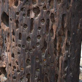 Holes by Heather Walton - Novices Only Objects & Still Life ( pole, woodpecker, telephone, holes, bettles )