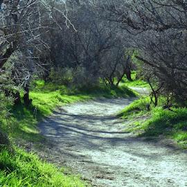 Winding Path by Rob Hallifax - Nature Up Close Leaves & Grasses ( #arizonastpk, #grass, #wilderness, #greengrass, #arizona,  )