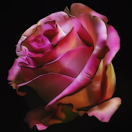 Digital Rose by Dave Walters - Digital Art Things ( pink rose, flowers, nature, artistic, lumix, colors, digital art )