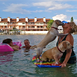 { Family Swim ~ Surfing Dogs  }  by Jeffrey Lee - People Family ( surfing dogs, swimming family,  )