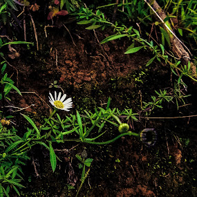 by Hrijul Dey - Flowers Flowers in the Wild