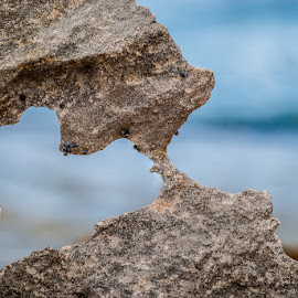 Love rocks by Joggie van Staden - Nature Up Close Rock & Stone ( macro, heart, nature, sea, beach, close up, rocks )