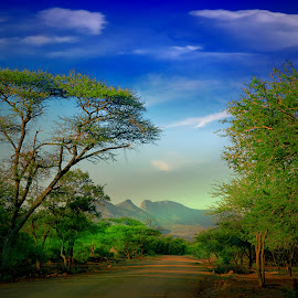 Somewhere in Marekele National Park by Danette de Klerk - Landscapes Mountains & Hills ( national park, bush, trees, dirt road, wildlife )