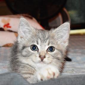Kitten's new home by Benny Lopez - Animals - Cats Kittens ( kitten, cat )