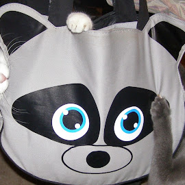 Mommies new bag by Debra Griffin - Animals - Cats Playing ( silly cats, purse, funny, play, kittens )
