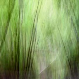 Nisene Marks One-3 by Matt Folsom - Abstract Light Painting ( redwoods, nisene marks, hike )