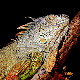 Escalade by Gérard CHATENET - Animals Reptiles