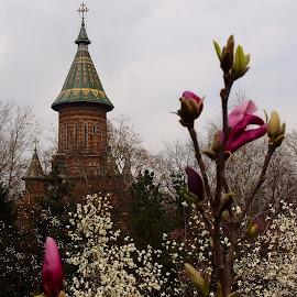 Blossom by Loredana Gancea - City,  Street & Park  Vistas ( park, cathedral, flowers, spring, blossom )