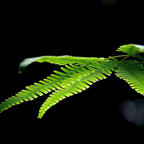 Fern by Zulkifli HAL - Nature Up Close Leaves & Grasses